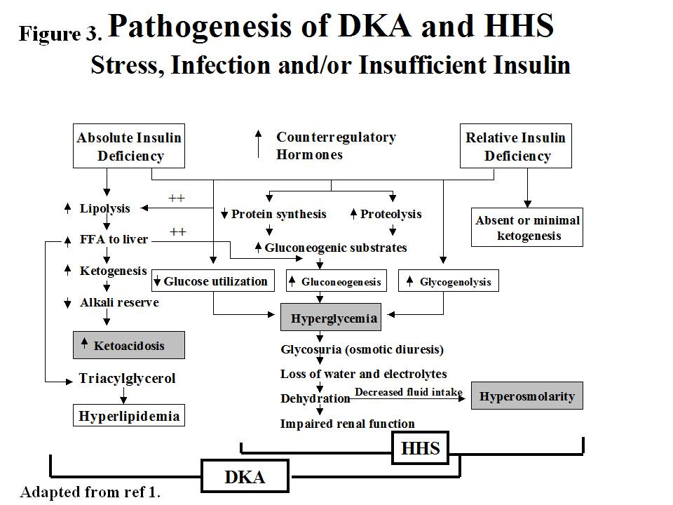 diabetesmanager / hyperglycemic crises: diabetic ketoacidosis (dka, Skeleton